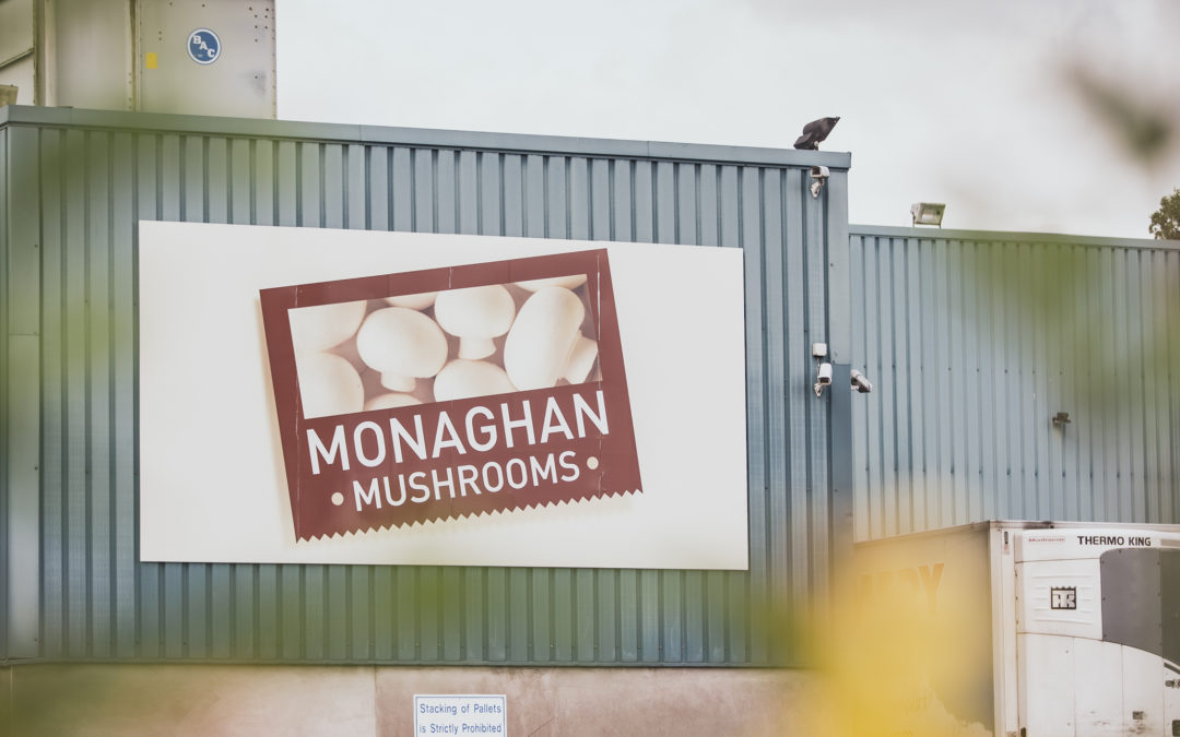 BIOrescue project partners to visit Monaghan's mushroom farm in Ireland