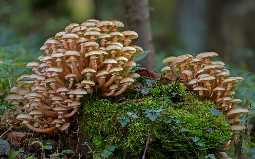 Breakthrough technologies for a sustainable mushroom industry